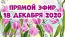 Прямой Эфир - Собираем букет из тюльпанов