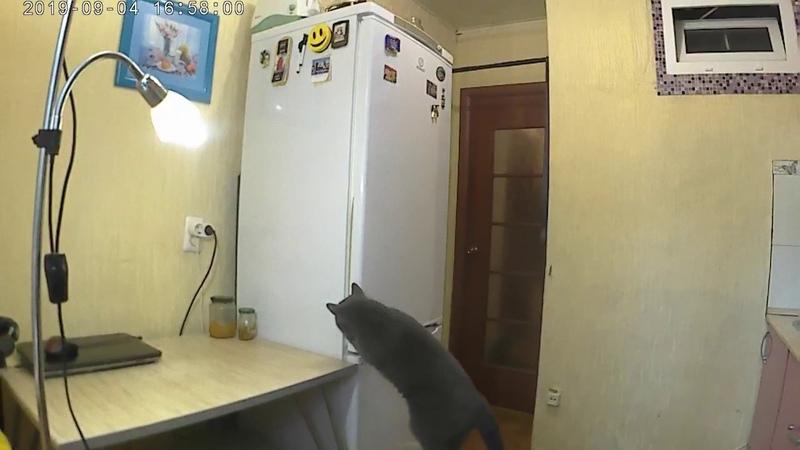 Саймон открывает холодильник