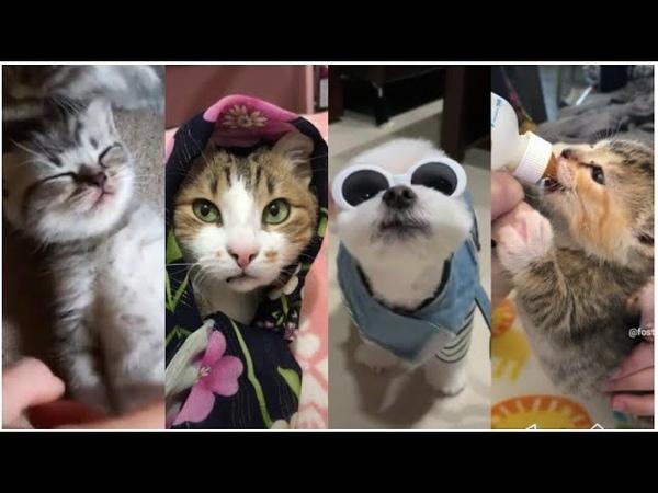 Tiktok hayvanlar en güzel videolar