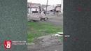 В Каслях бездомные собаки загрызли козленка