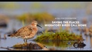 A Call for Cooperation: Saving the Places Migratory Birds Call Home