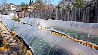 Пленочный туннель для заливных грядок.