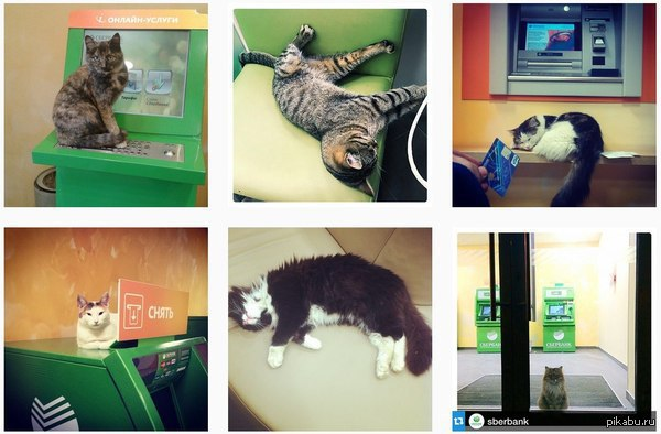 Сбербанк собирает фоточки котов