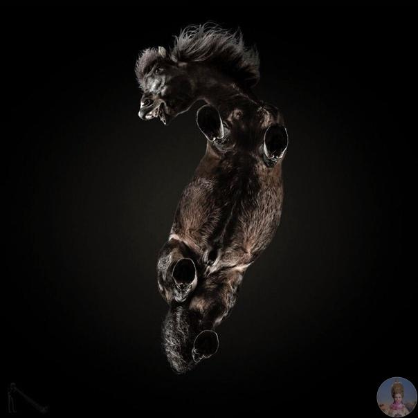 «Однажды мне пришла в голову сумасшедшая идея сфотографировать лошадь снизу В результате я снял самую сложную фотосессию в своей карьере». Андриус