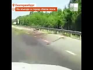 На Московском тракте сбили лося