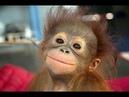 😂 Смешные Видео/ Приколы с животными 2021 7 минут/ ржал до слёз.