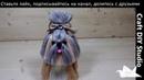 Собака из ниток Craft DIY Studio