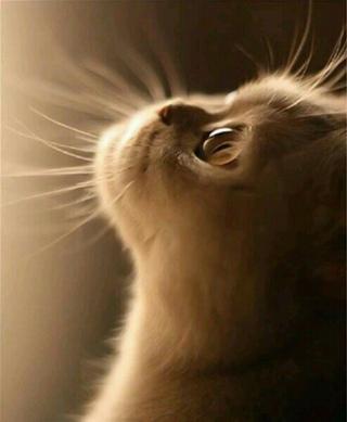 кошка..сдиночество..луна..