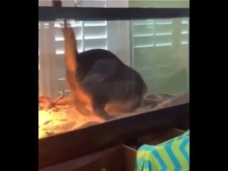 Кошка нашла новое местечко