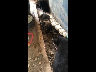 Видео от ДЕЛАЙ ДОБРО Бездомные Животные Волгодонска