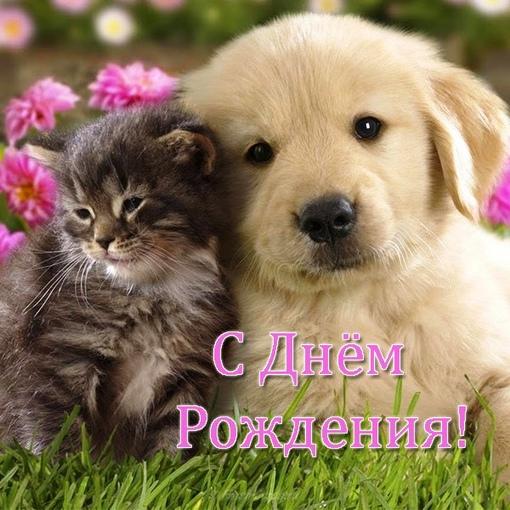 Сегодня поздравляем с Днем Рождения: Лилия Ахметова ([id160255292|@id160255292]),