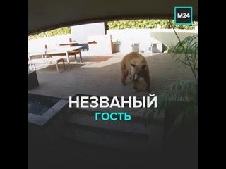 Незваный гость — Москва 24