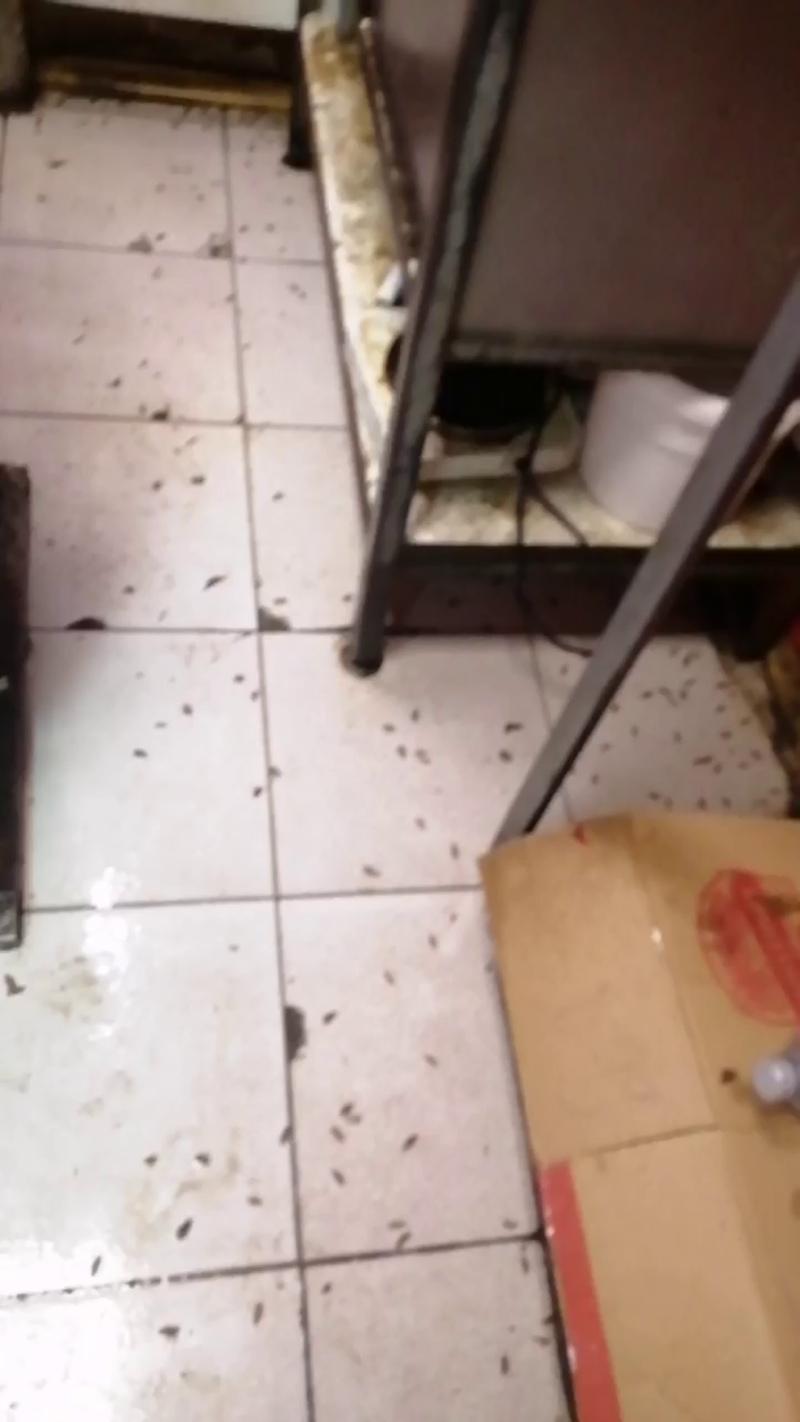 Уничтожение тараканов, 5 минут после обработки