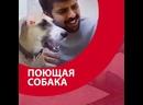 Поющая собака - Москва FM