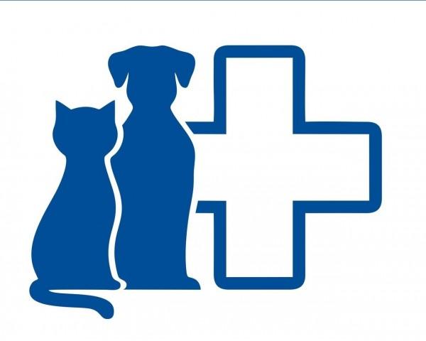 Цистит у кошки лечение Иркутск