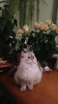 Катя Иванова фото №21