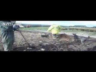 ✔ ОСОБОЕ МНЕНИЕ: Ликвидация крыс на ферме