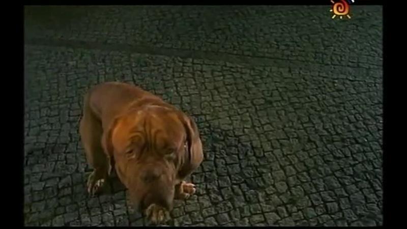 ТС Домик с собачкой 2 серия 2002г