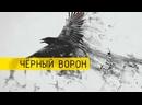 Черный ворон ✦ 💥 ✦ НОВИНКА ✦ 💥 ✦ ПЕСНЯ БЕРЁТ ЗА ДУШУ ✦