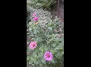 Видео от Шакен Калабаевой