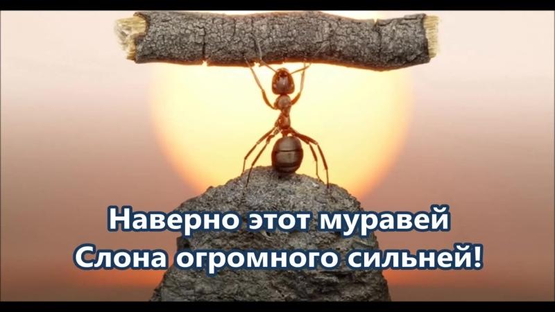 Луг-лужок (с текстом)