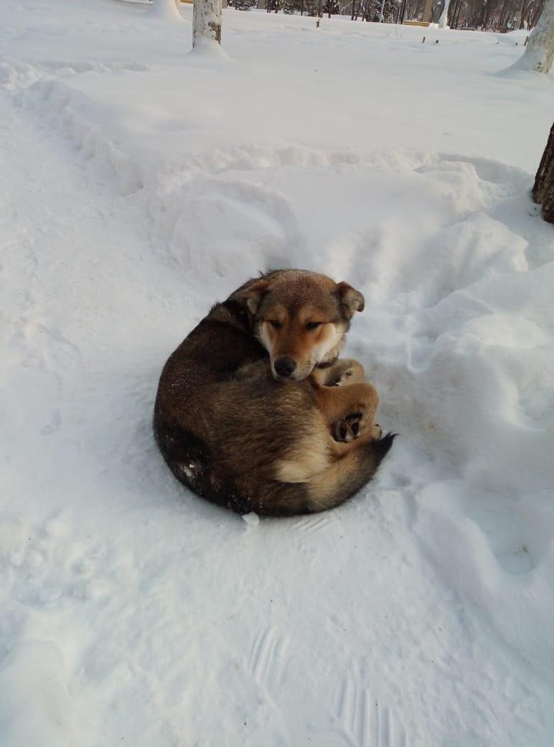Добрый день! На снегу спит и замерзает
