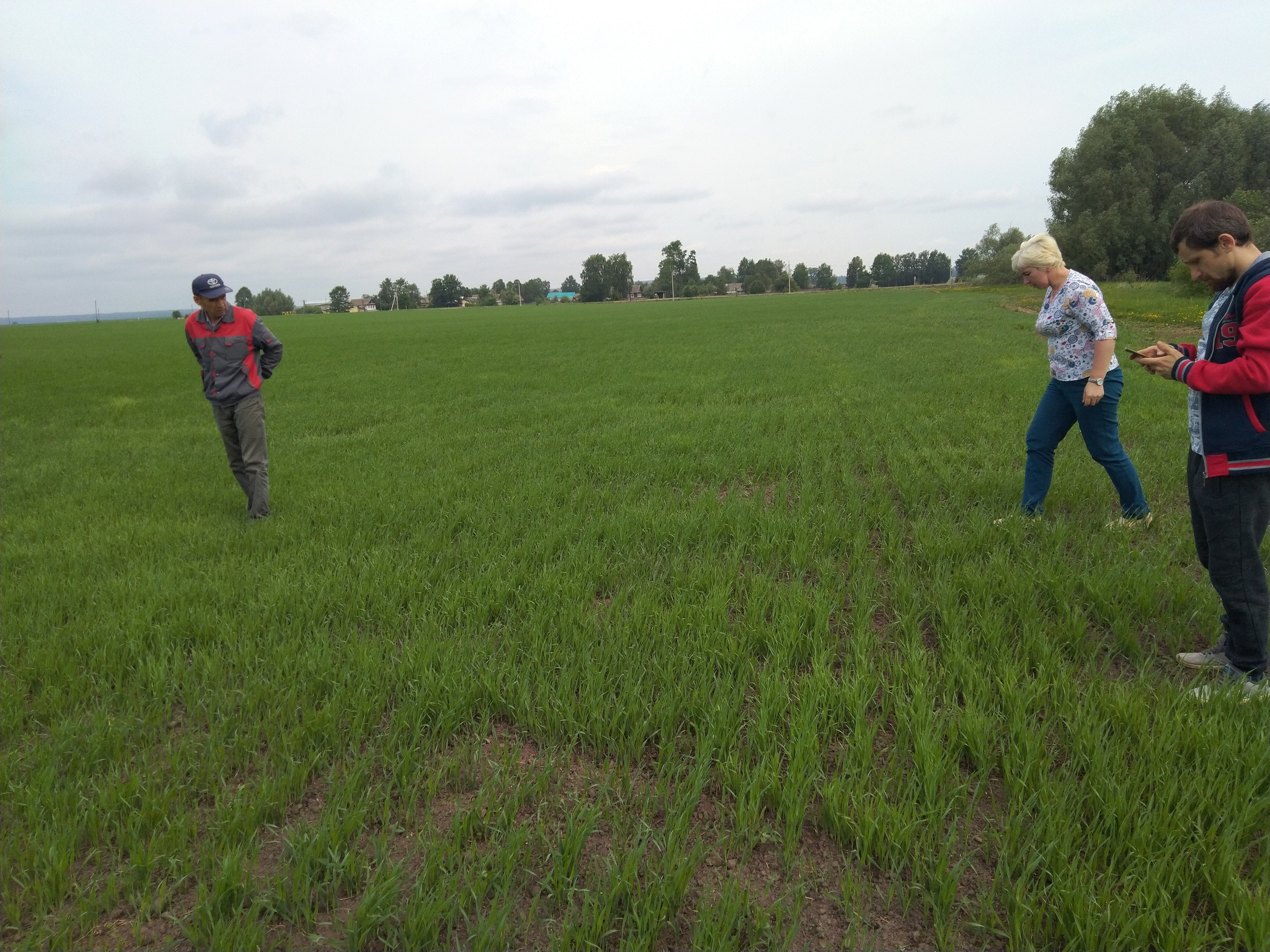 Вести с полей.☘ В Можгинском районе