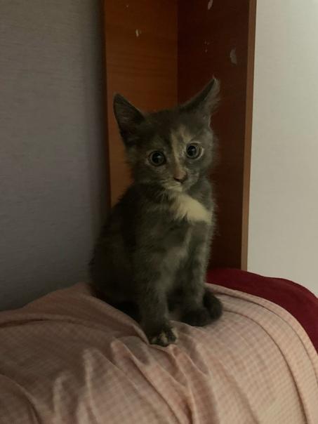 Очень срочноо 😔Пропал котёнок!!! Два дня назадНе м...