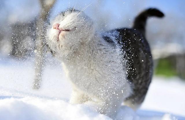 веселые анекдоты и приколы про зимнюю погоду,