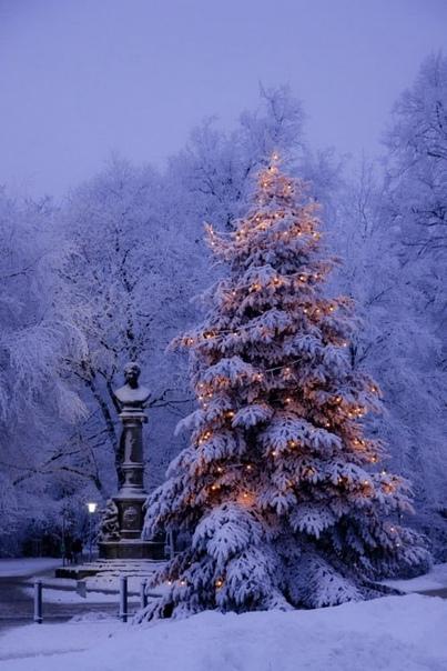 Немного Новогоднего настроения вам в ленту 🎄🎅❄🎉🎊🎁🎄...
