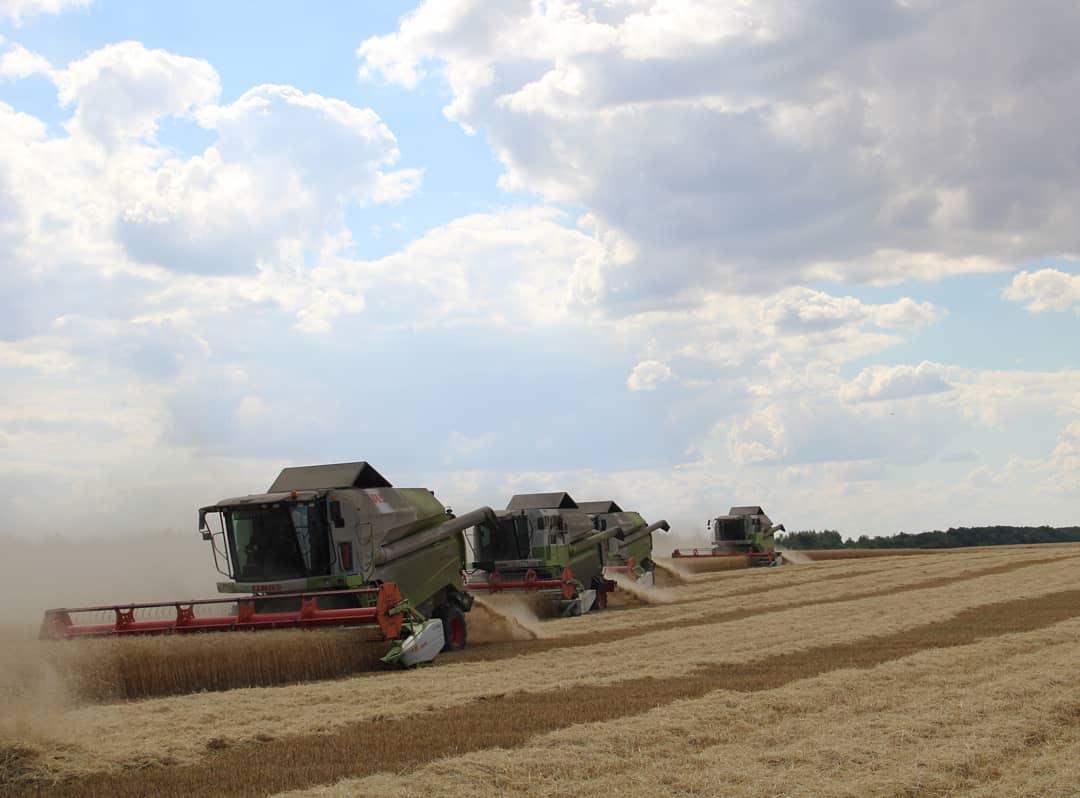 В Петровском районе озимые зерновые культуры скошены на площади 33 500 га