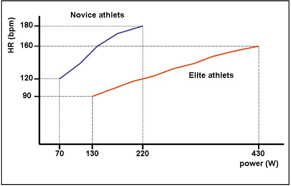 Пример увеличения частоты сердечных сокращений у элитных и начинающих спортсменов