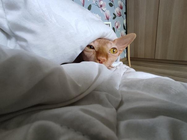 Всем утра доброго ...Какой же у меня страшный кот ...