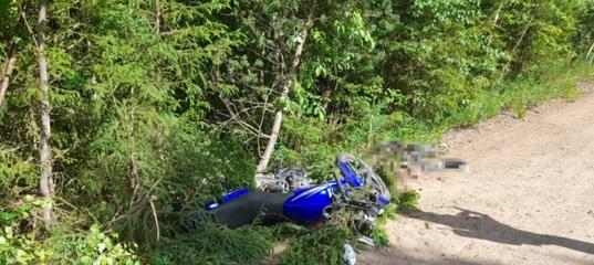В Плесецком районе мотоциклист погиб, врезавшись в дерево