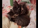 One kitten licks the second and then falls asleep together
