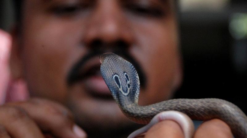 10 Самых опасных змей в мире! Ядовитые, агрессивные и очень непредсказуемые змеи!