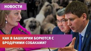 В Башкирии псы насмерть загрызли ребёнка. Депутаты предлагают ввести регистрацию собак