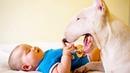 Bull Terrier Loves Kids - Best Friend Forever of Children