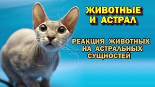 Животные и астрал. Выход в Астрал.👿👿 Реакция животных на астральных сущностей.