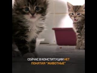 Звери под защитой государства! Помоги животным своей подписью