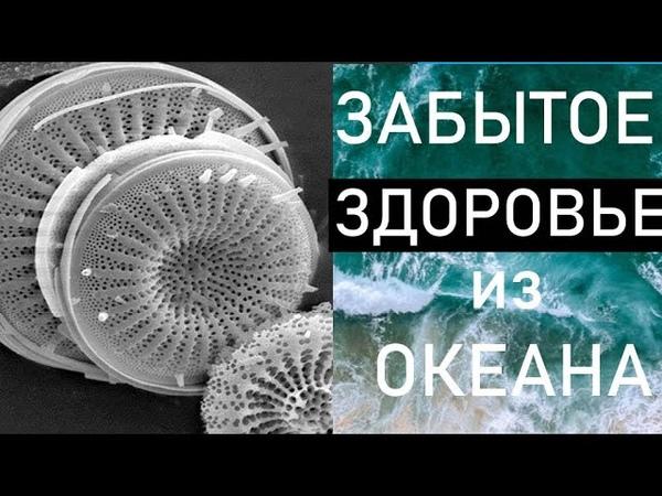 ДИАТОМИТ ЗАБЫТОЕ ЗДОРОВЬЕ из океана Кизельгур Чем он полезен