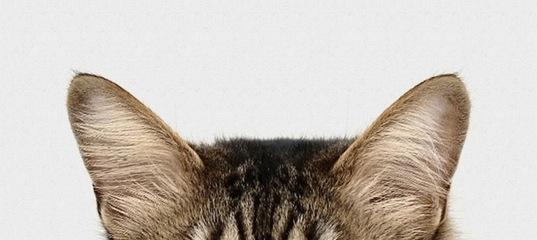 фелис клуб кошек москва официальный