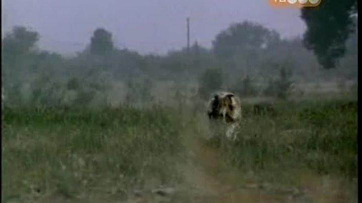 Новые приключения Лэсси 1989 1991 2 сезона